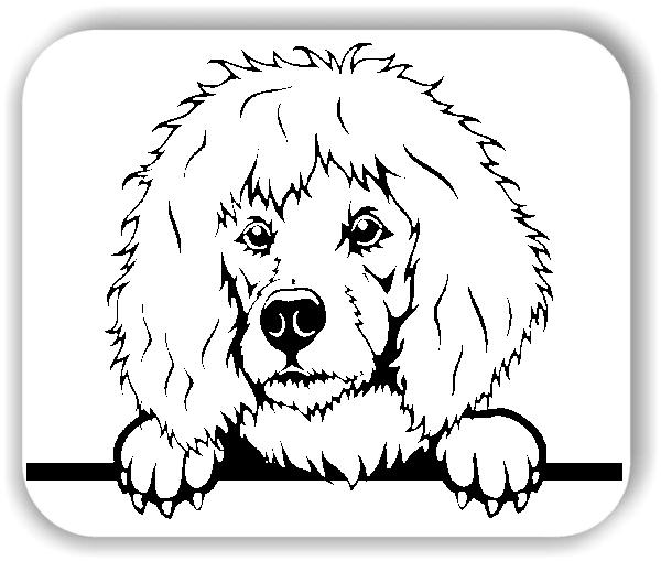 Wandtattoo - Hunde - Pudel - ohne Rassename