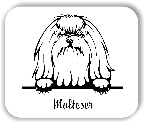 Wandtattoo - Hunde - Malteser Variante 3