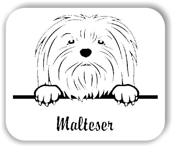 Wandtattoo - Hunde - Malteser Variante 1